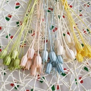 35 プリザーブド ドライフラワー ハーバリウム花材