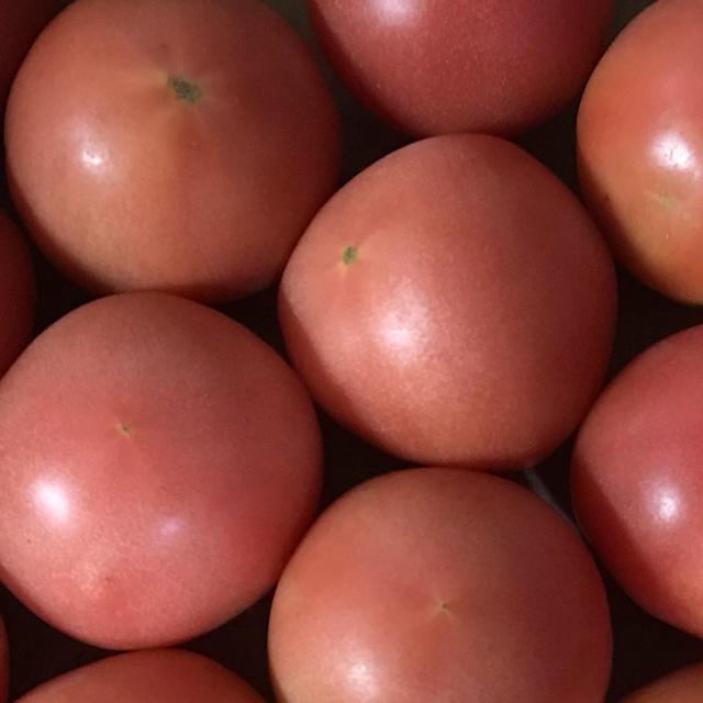 トマト6キロ 食品/飲料/酒の食品(野菜)の商品写真