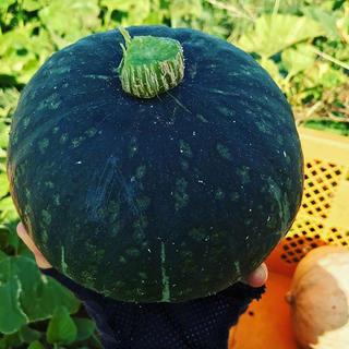 【じょい樣専用】かぼちゃセット(野菜)