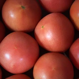トマト6キロ(野菜)