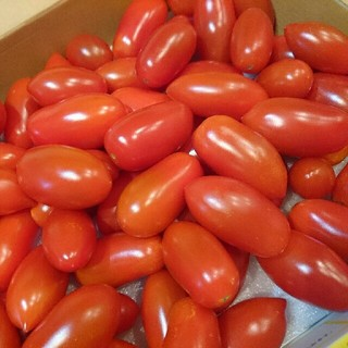 フルーツトマト 新潟産 1kg