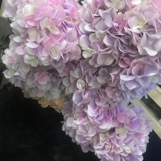 Francfranc - 紫陽花ボリュームあり パープルピンク造花