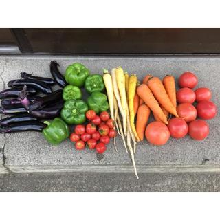 夏野菜セット 80サイズ