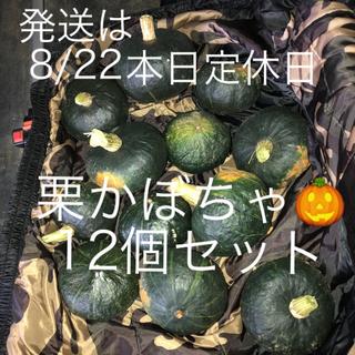 栗かぼちゃ 12個セット