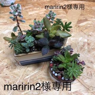多肉植物寄植え maririn2様専用(その他)