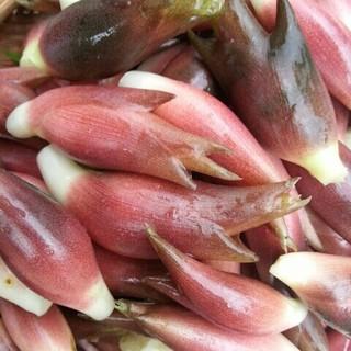 【予約専用ページ】限定 秋みょうが みょうが 無農薬 無肥料 オーガニック