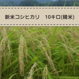 新米コシヒカリ こうちゃん米10キロ(精米)(米/穀物)