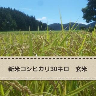 新米コシヒカリ こうちゃん米30キロ(玄米)(米/穀物)