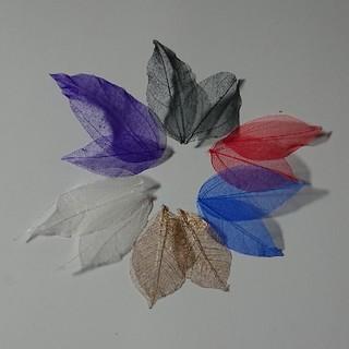 スケルトンリーフ(赤・黒・青・紫・白・金)6色お試しセット (ドライフラワー)