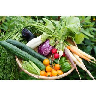 もぐもぐ野菜❁詰め合わせ  60(53cm)(野菜)