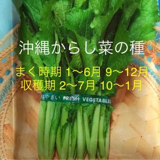 種 沖縄からし菜(野菜)