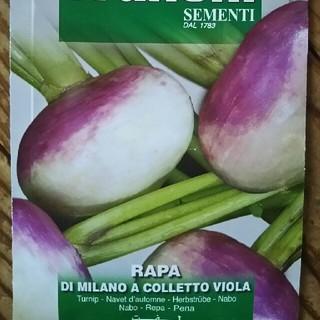 紫かぶ(ミラノ種ヴィオラ)の種子(野菜)