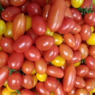 【残りわずか!】ミニトマト アイコ(野菜)