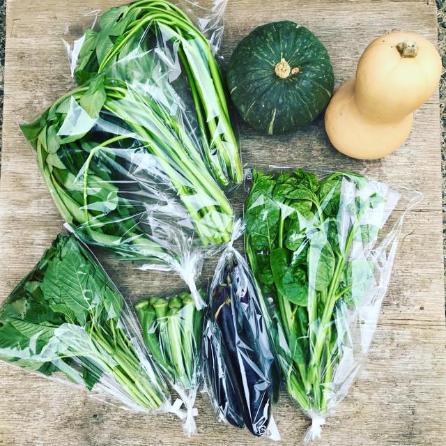 渥美半島から直送!旬彩野菜バスケット 食品/飲料/酒の食品(野菜)の商品写真