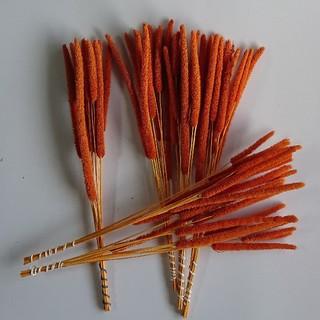 チモシーグラスのテラコッタオレンジ(ドライフラワー)