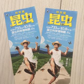 特別展  昆虫  国立科学博物館  さっちゃん専用(美術館/博物館)
