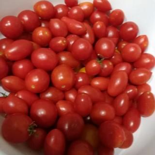 【小粒】ミニトマト アイコ 無農薬(野菜)