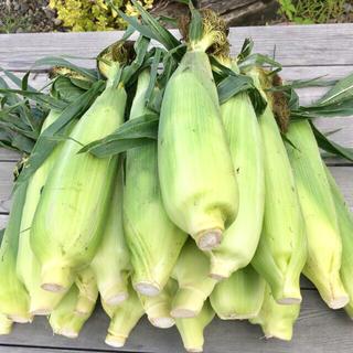 【アウトレット・B品】ゴールドラッシュ(M~Lサイズ・18~20本入)(野菜)
