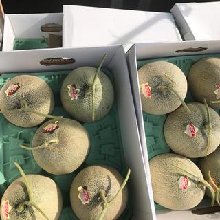 北海道産 赤肉 メロン  8kg  5玉入り(フルーツ)