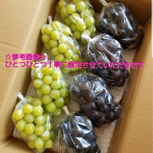 送料込み 長野限定 希少品種『ナガノパープル』約2kg 4~5房入り ブドウ葡萄 食品/飲料/酒の食品(フルーツ)の商品写真