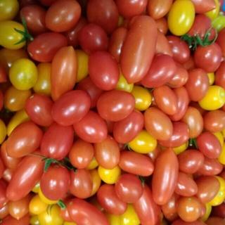【美品】ミニトマト アイコ 無農薬(野菜)