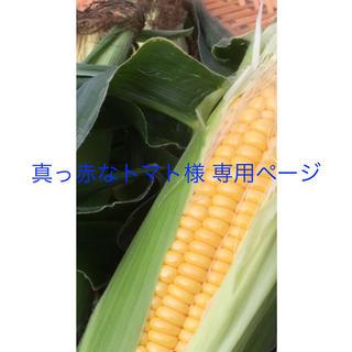 真っ赤なトマト様 専用ページ(野菜)