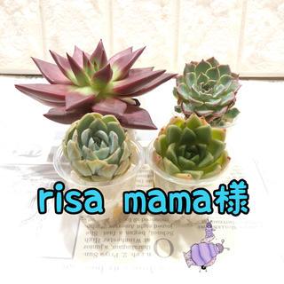 risamama様専用 多肉植物(その他)