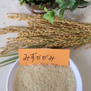 新米 玄米30kg 普通精米無料(米/穀物)
