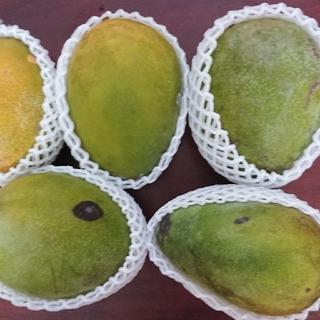 マンゴー 2.7kg 家庭用(フルーツ)