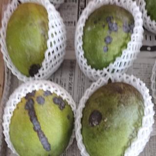 マンゴー 2.7kg 家庭用 2(フルーツ)