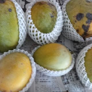 マンゴー 2.7kg 家庭用 3(フルーツ)