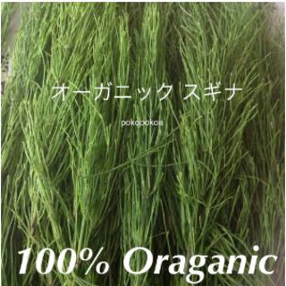 スギナ オーガニック100% 天然 完全無農薬無化学肥料有機栽培畑採取(茶)