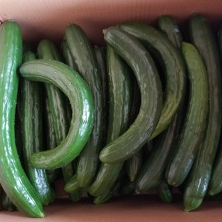 訳ありキュウリ《規格外3kg》(野菜)