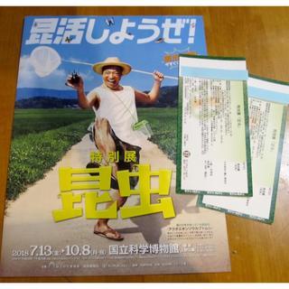 特別展 昆虫 10/8まで(美術館/博物館)