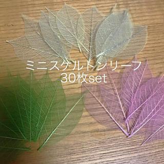 スケルトン 透明 花材 プリザー ドライフラワー(ドライフラワー)