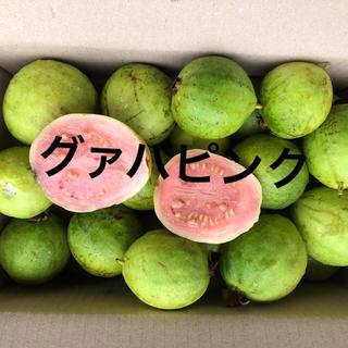 グァバ徳之島産ピンクのみ1キロ   2000円(フルーツ)