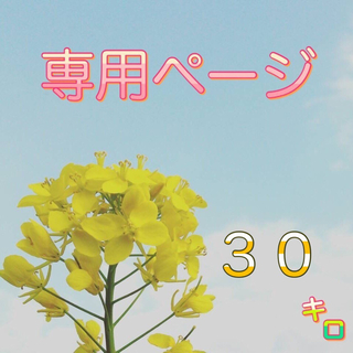 【OYO様専用】愛媛県産あきたこまち100%   新米30kg   農家直送(米/穀物)