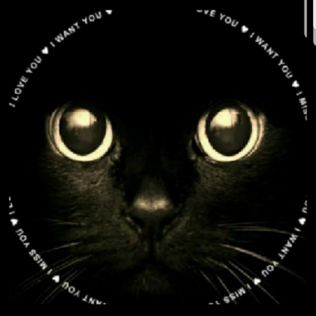 ラブリング  wgマルチカラー【 13号 or 15.5号】 レディースのアクセサリー(リング(指輪))の商品写真