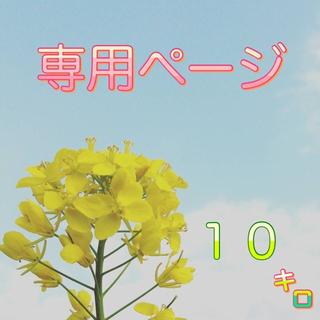 【babachi様専用】愛媛県産あきたこまち100%   新米10kg 農家直送(米/穀物)