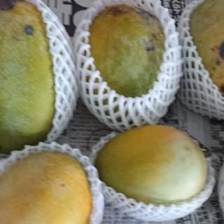 マンゴー 2.7kg 家庭用 4(フルーツ)
