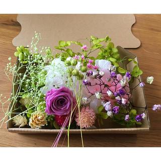 ドライフラワー花材 パープルグリーン⑤(ドライフラワー)
