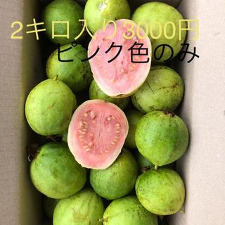 もぎ立てグァバ徳之島産2キロ3000円ピンクのみ(フルーツ)