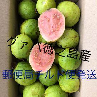 もぎたてグァバ徳之島産1キロ2000円ピンクのみ(野菜)