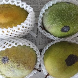 マンゴー 2.7kg 家庭用5(フルーツ)