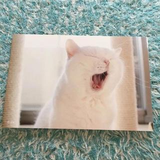 ねこ休み展 ポストカード 非売品(キャラクターグッズ)
