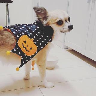 犬用☆ハロウィンマント☆