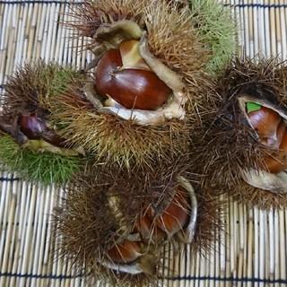 【熊本県産 】完全無農薬 栗 3kg(フルーツ)