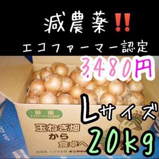 北海道産 減農薬 玉ねぎ Lサイズ 20キロ