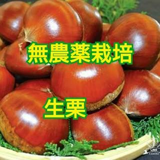 無農薬 有機栽培 生栗 利平 2キロ
