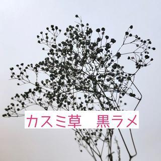カスミ草 *黒ラメ 大地農園(プリザーブドフラワー)